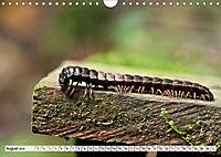 INSEKTEN GANZ NAHE (Wandkalender 2019 DIN A4 quer) - Produktdetailbild 8