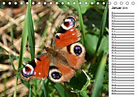 Insektenfauna des Kraichgaus (Tischkalender 2019 DIN A5 quer) - Produktdetailbild 1