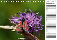 Insektenfauna des Kraichgaus (Tischkalender 2019 DIN A5 quer) - Produktdetailbild 11