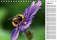 Insektenfauna des Kraichgaus (Tischkalender 2019 DIN A5 quer) - Produktdetailbild 8