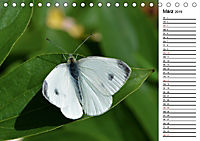 Insektenfauna des Kraichgaus (Tischkalender 2019 DIN A5 quer) - Produktdetailbild 3