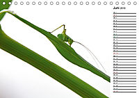 Insektenfauna des Kraichgaus (Tischkalender 2019 DIN A5 quer) - Produktdetailbild 6
