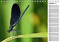 Insektenfauna des Kraichgaus (Tischkalender 2019 DIN A5 quer) - Produktdetailbild 10