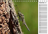 Insektenfauna des Kraichgaus (Tischkalender 2019 DIN A5 quer) - Produktdetailbild 12