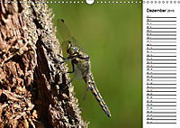 Insektenfauna des Kraichgaus (Wandkalender 2019 DIN A3 quer) - Produktdetailbild 4