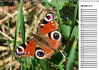 Insektenfauna des Kraichgaus (Wandkalender 2019 DIN A3 quer) - Produktdetailbild 6