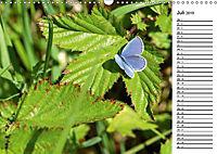 Insektenfauna des Kraichgaus (Wandkalender 2019 DIN A3 quer) - Produktdetailbild 7