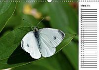 Insektenfauna des Kraichgaus (Wandkalender 2019 DIN A3 quer) - Produktdetailbild 8