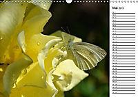 Insektenfauna des Kraichgaus (Wandkalender 2019 DIN A3 quer) - Produktdetailbild 10