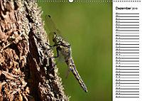 Insektenfauna des Kraichgaus (Wandkalender 2019 DIN A2 quer) - Produktdetailbild 5