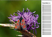 Insektenfauna des Kraichgaus (Wandkalender 2019 DIN A2 quer) - Produktdetailbild 7