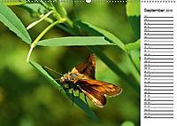 Insektenfauna des Kraichgaus (Wandkalender 2019 DIN A2 quer) - Produktdetailbild 12