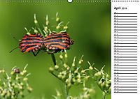 Insektenfauna des Kraichgaus (Wandkalender 2019 DIN A2 quer) - Produktdetailbild 4