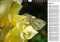Insektenfauna des Kraichgaus (Wandkalender 2019 DIN A4 quer) - Produktdetailbild 5