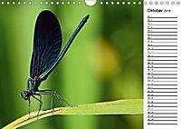 Insektenfauna des Kraichgaus (Wandkalender 2019 DIN A4 quer) - Produktdetailbild 10