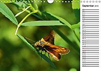 Insektenfauna des Kraichgaus (Wandkalender 2019 DIN A4 quer) - Produktdetailbild 9