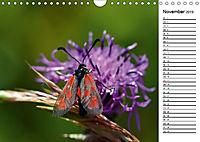 Insektenfauna des Kraichgaus (Wandkalender 2019 DIN A4 quer) - Produktdetailbild 11