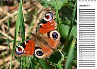 Insektenfauna des Kraichgaus (Wandkalender 2019 DIN A2 quer) - Produktdetailbild 1