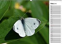 Insektenfauna des Kraichgaus (Wandkalender 2019 DIN A2 quer) - Produktdetailbild 3