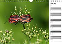 Insektenfauna des Kraichgaus (Wandkalender 2019 DIN A4 quer) - Produktdetailbild 4