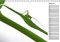 Insektenfauna des Kraichgaus (Wandkalender 2019 DIN A4 quer) - Produktdetailbild 6