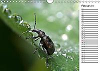 Insektenfauna des Kraichgaus (Wandkalender 2019 DIN A4 quer) - Produktdetailbild 2
