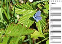 Insektenfauna des Kraichgaus (Wandkalender 2019 DIN A4 quer) - Produktdetailbild 7