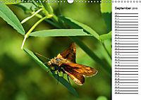 Insektenfauna des Kraichgaus (Wandkalender 2019 DIN A3 quer) - Produktdetailbild 9