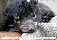Inselschönheit Tasmanien (Wandkalender 2019 DIN A4 quer) - Produktdetailbild 3