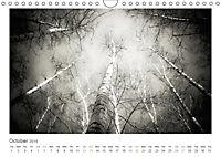 Into the Forest (Wall Calendar 2019 DIN A4 Landscape) - Produktdetailbild 10