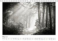 Into the Forest (Wall Calendar 2019 DIN A4 Landscape) - Produktdetailbild 5