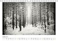Into the Forest (Wall Calendar 2019 DIN A4 Landscape) - Produktdetailbild 6