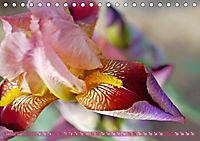 Iris - mondäne Gartenschönheit (Tischkalender 2019 DIN A5 quer) - Produktdetailbild 1