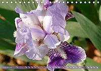Iris - mondäne Gartenschönheit (Tischkalender 2019 DIN A5 quer) - Produktdetailbild 2