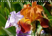 Iris - mondäne Gartenschönheit (Tischkalender 2019 DIN A5 quer) - Produktdetailbild 3