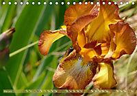 Iris - mondäne Gartenschönheit (Tischkalender 2019 DIN A5 quer) - Produktdetailbild 5