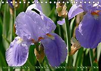 Iris - mondäne Gartenschönheit (Tischkalender 2019 DIN A5 quer) - Produktdetailbild 4