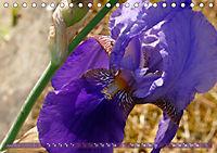 Iris - mondäne Gartenschönheit (Tischkalender 2019 DIN A5 quer) - Produktdetailbild 6