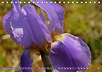 Iris - mondäne Gartenschönheit (Tischkalender 2019 DIN A5 quer) - Produktdetailbild 9
