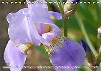 Iris - mondäne Gartenschönheit (Tischkalender 2019 DIN A5 quer) - Produktdetailbild 12