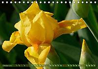 Iris - mondäne Gartenschönheit (Tischkalender 2019 DIN A5 quer) - Produktdetailbild 10