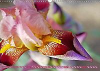 Iris - mondäne Gartenschönheit (Wandkalender 2019 DIN A3 quer) - Produktdetailbild 1