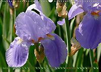 Iris - mondäne Gartenschönheit (Wandkalender 2019 DIN A3 quer) - Produktdetailbild 4