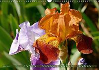 Iris - mondäne Gartenschönheit (Wandkalender 2019 DIN A3 quer) - Produktdetailbild 3