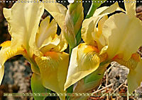 Iris - mondäne Gartenschönheit (Wandkalender 2019 DIN A3 quer) - Produktdetailbild 7