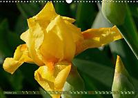 Iris - mondäne Gartenschönheit (Wandkalender 2019 DIN A3 quer) - Produktdetailbild 10