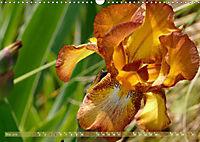 Iris - mondäne Gartenschönheit (Wandkalender 2019 DIN A3 quer) - Produktdetailbild 5