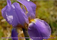 Iris - mondäne Gartenschönheit (Wandkalender 2019 DIN A3 quer) - Produktdetailbild 9