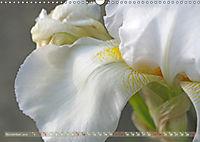 Iris - mondäne Gartenschönheit (Wandkalender 2019 DIN A3 quer) - Produktdetailbild 11