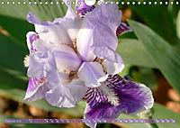 Iris - mondäne Gartenschönheit (Wandkalender 2019 DIN A4 quer) - Produktdetailbild 2